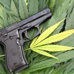 Debate Swells Over Medical Marijuana And Gun Ownership