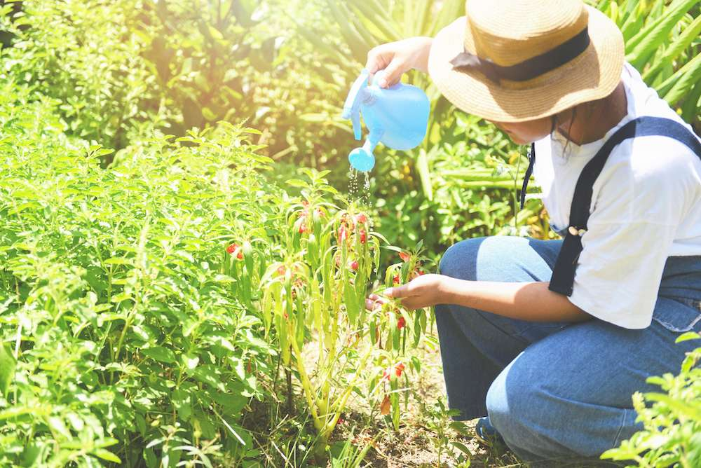 Gardening Trainer Teaches Skill To Those In Recovery, Living With Mental Illness