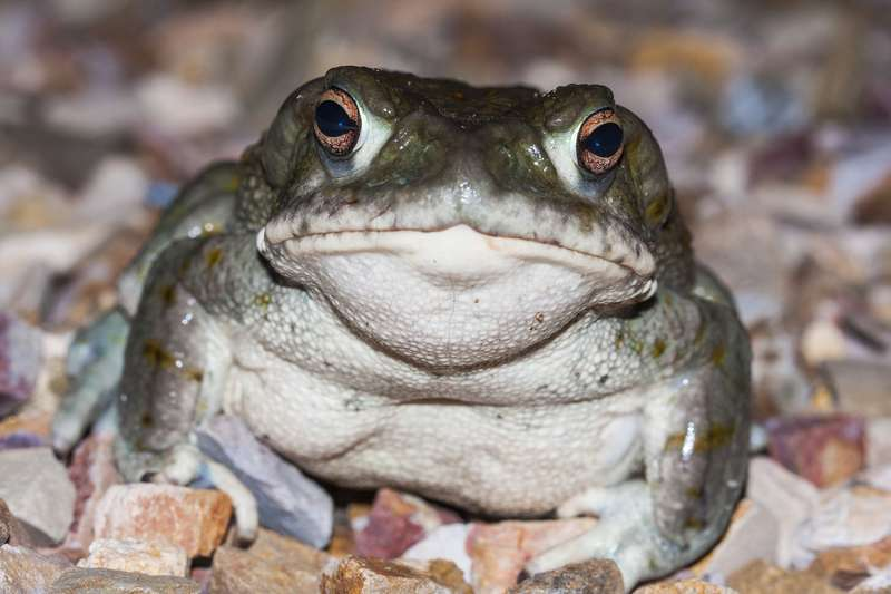 Toad Venom May Be The Next Psychedelic Frontier
